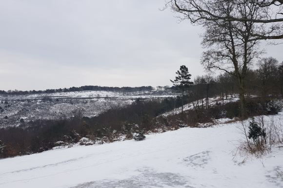 Hindhead Commons in the snow