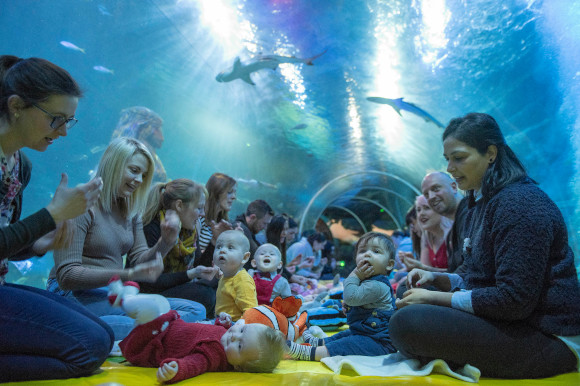 Trial between Baby Sensory and Sea Life UK explores sensory experiences in a water-based environment to support early years development