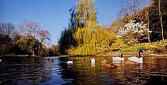 Busbridge Lakes Exotic Waterbirds & Gardens