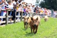 Bocketts Farm Party