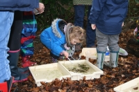 Little Seeds Forest School